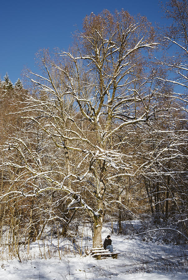 Winter Photograph - Break Under A Large Tree - Sunny Winter Day by Matthias Hauser