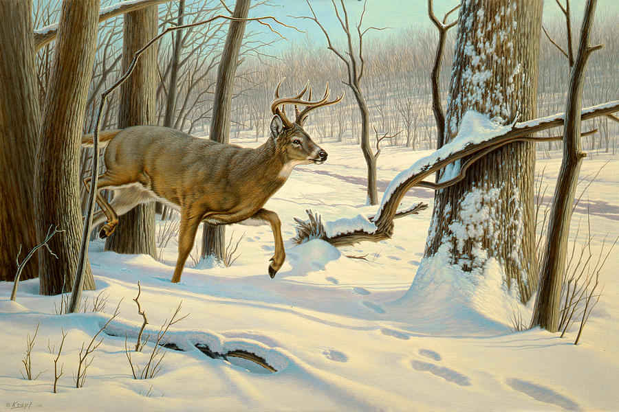 Wildlife Painting - Breaking Cover-whitetail by Paul Krapf
