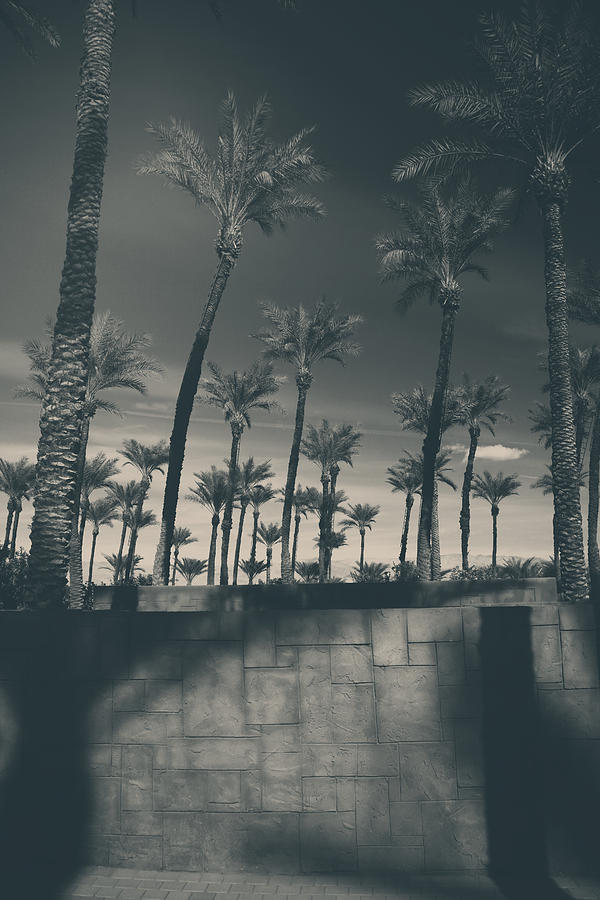 Palm Trees Photograph - Breaking Down Walls by Laurie Search