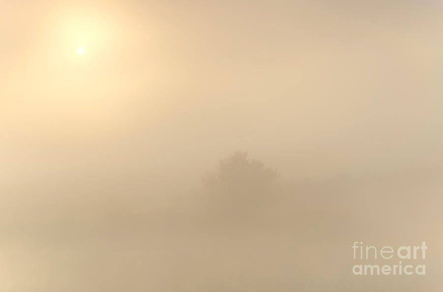 Fog Photograph - Breaking Through by Mike  Dawson