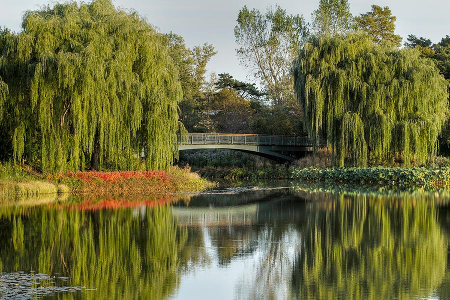Chicago Botanical Garden Photograph - Bridge Of Reflection by Leo Thomas Garcia