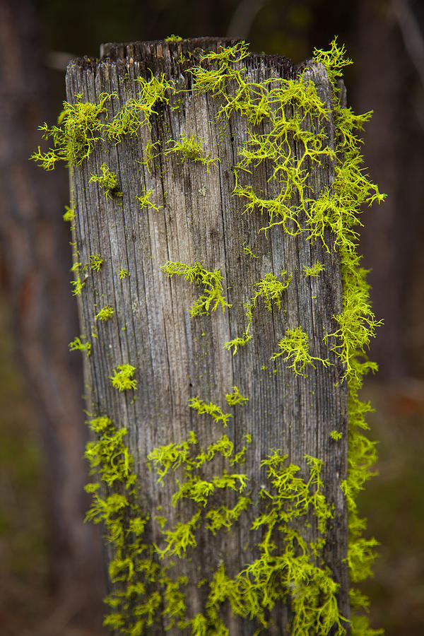 Forest Painting - Bright Green Lace by Omaste Witkowski