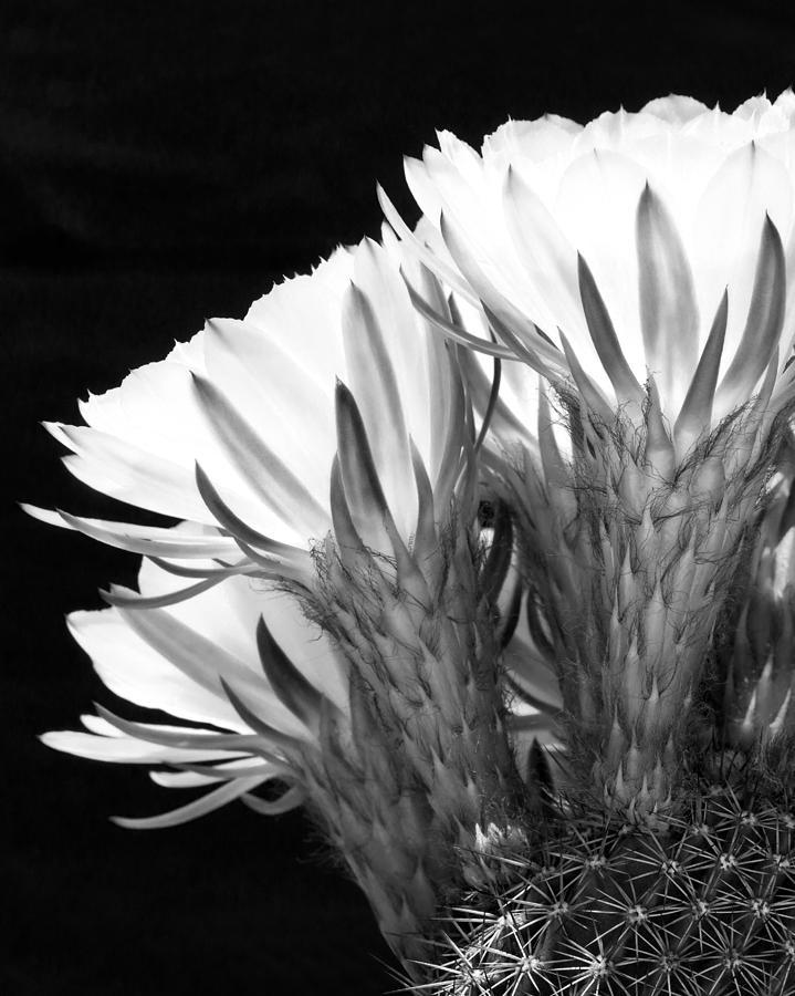 Brilliant Blossoms Diptych Left Photograph