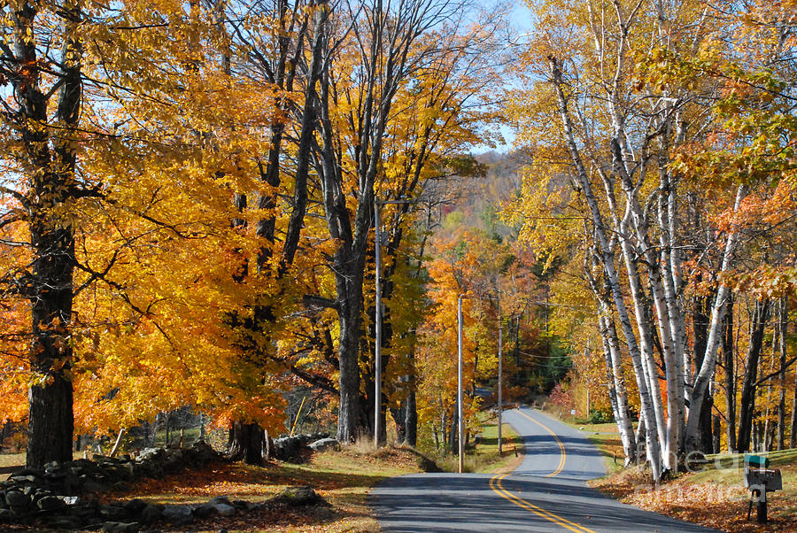 Brilliant Fall Colors And Country Road Near Marlboro Vermont Photograph