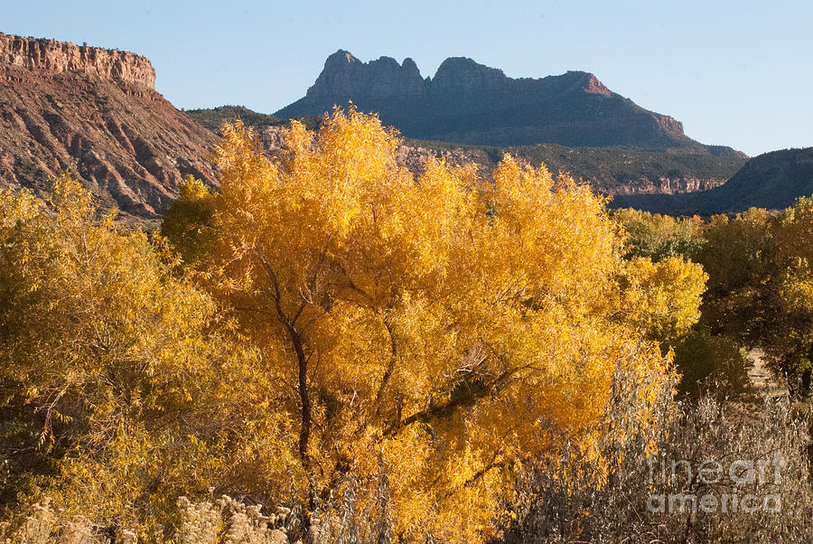 Brilliant Yellow Fall Colors Along The Virgin River Utah Photograph