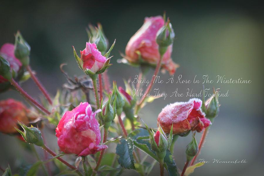 Bring Me A Rose Photograph