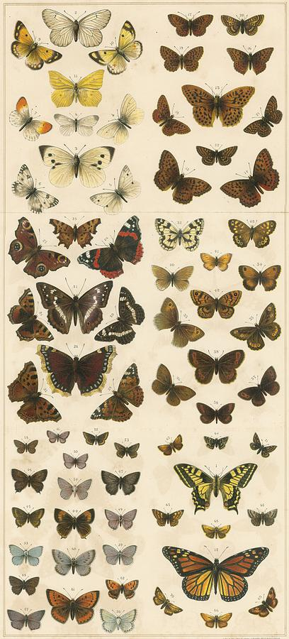 British Butterflies Painting  - British Butterflies Fine Art Print