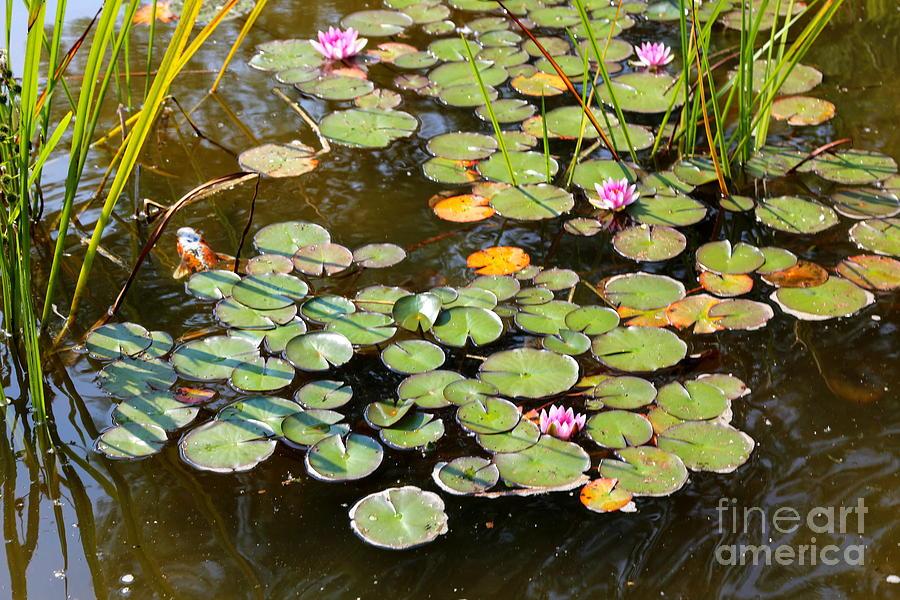 Bruges Photograph - Bruges Lily Pond by Carol Groenen