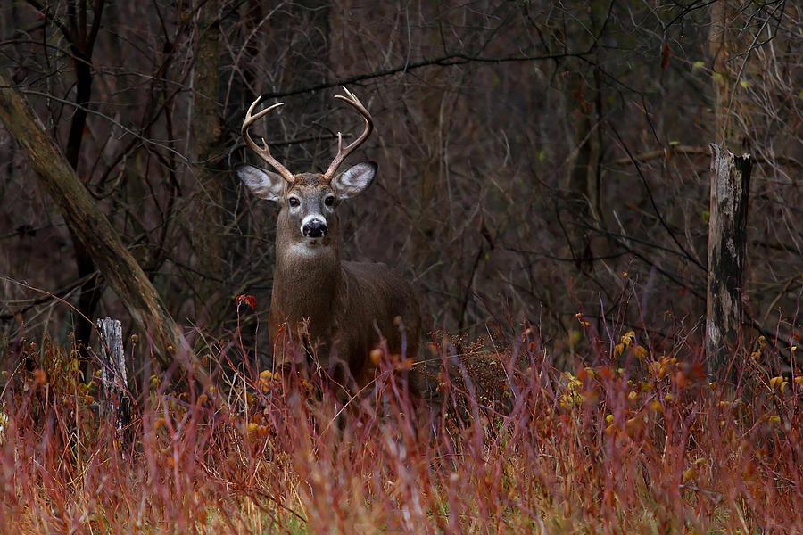 Buck Alert Photograph
