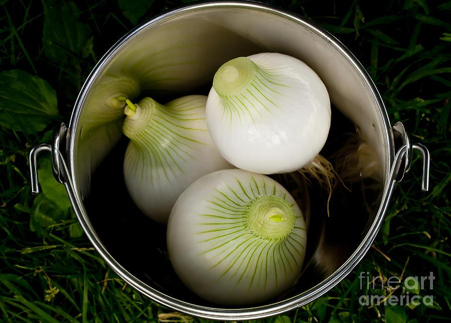 Onions Photograph - Bucket Of Onions by Wilma  Birdwell