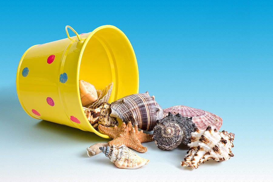Bucket Of Seashells Still Life Photograph  - Bucket Of Seashells Still Life Fine Art Print