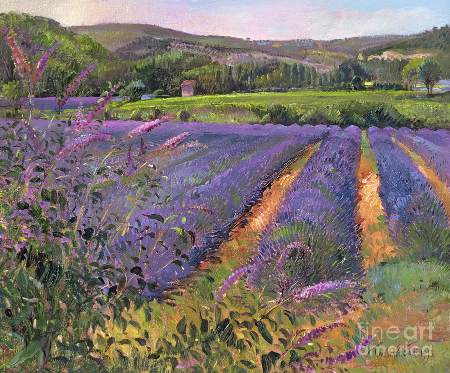 Flower; Landscape Painting - Buddleia And Lavender Field Montclus by Timothy Easton