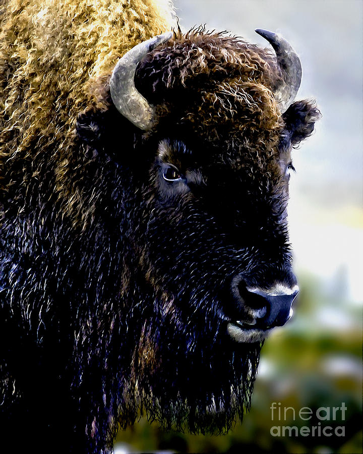 Buffalo In Yellowstone National Park Painting