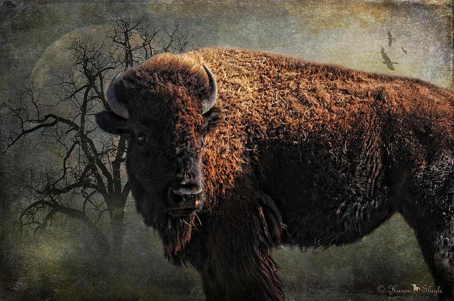 Buffalo Moon Photograph
