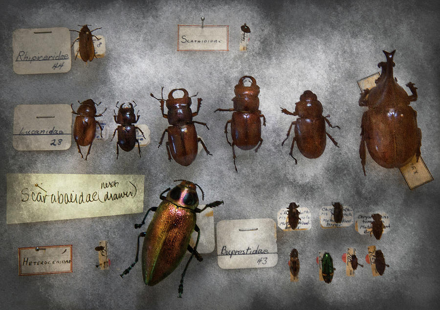 Hdr Photograph - Bug Collector - The Insect Collection  by Mike Savad