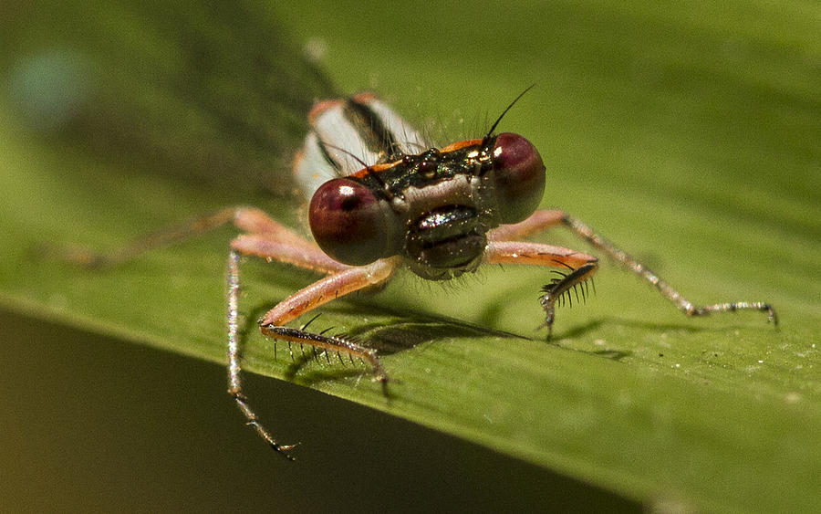 Insect Photograph - Bug Eyes by Jean Noren