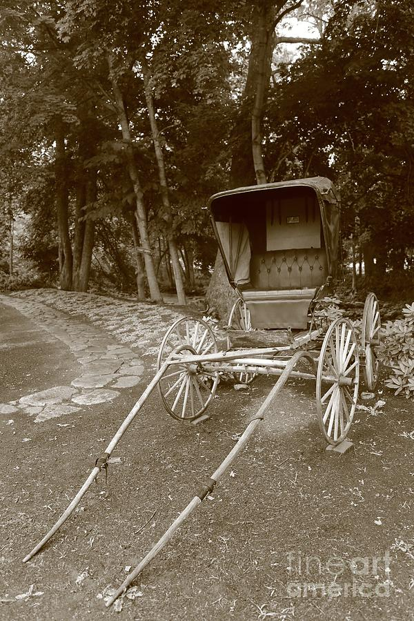 Buggy Photograph