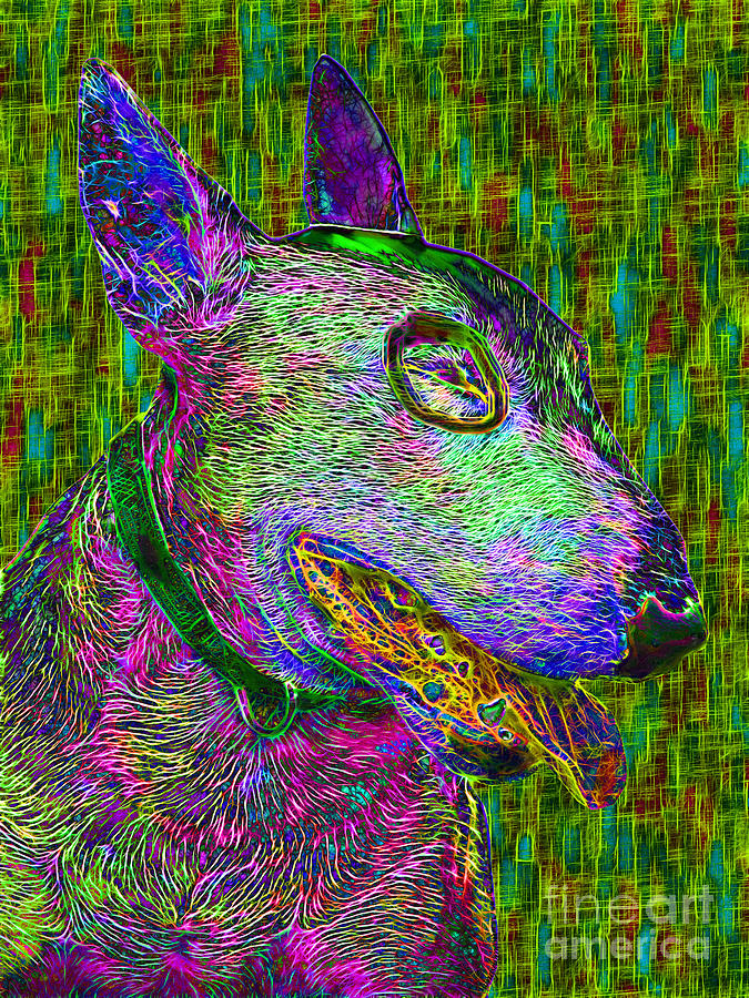 Bull Terrier Dog Pop Art - 20130121v3 Photograph  - Bull Terrier Dog Pop Art - 20130121v3 Fine Art Print