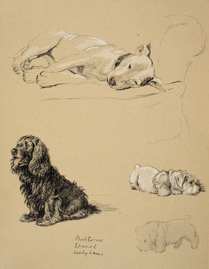 Dog Drawing - Bull-terrier, Spaniel And Sealyhams by Cecil Charles Windsor Aldin