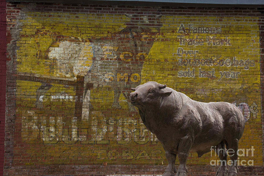Bullheaded Photograph  - Bullheaded Fine Art Print