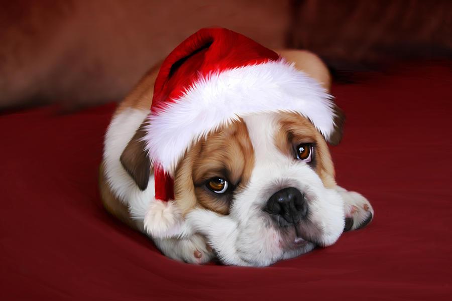 Christmas Digital Art - Bully For Santa by Julie L Hoddinott