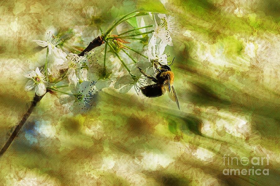 Bumble Bee Eating Sweet Nectar Photograph