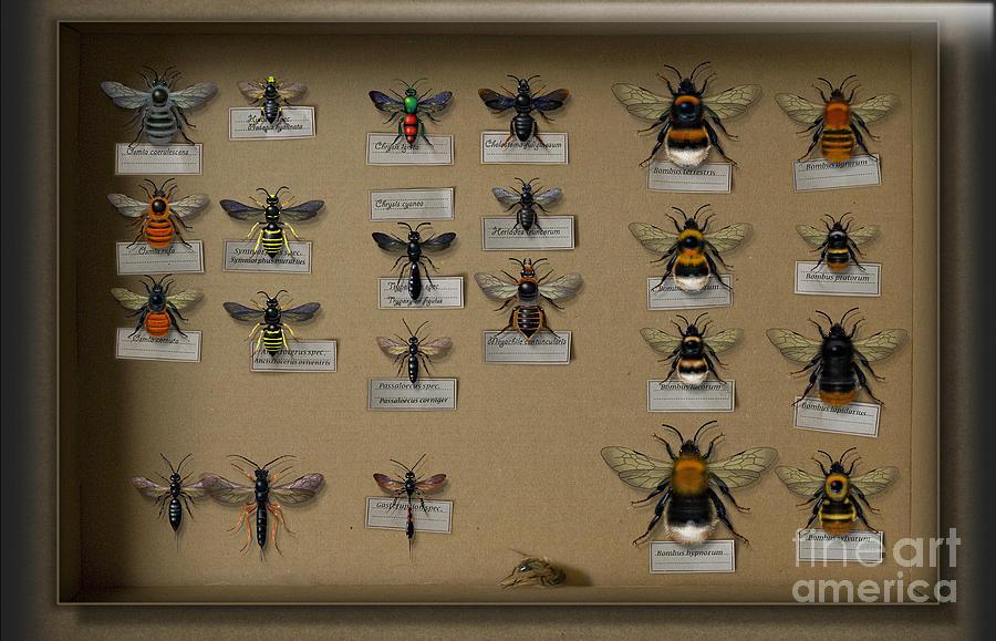 Bumblebees - Wild Bees - Wesps - Yellow Jackets - Ichneumon Flies - Apiformes Vespulas Hymenopteras Painting