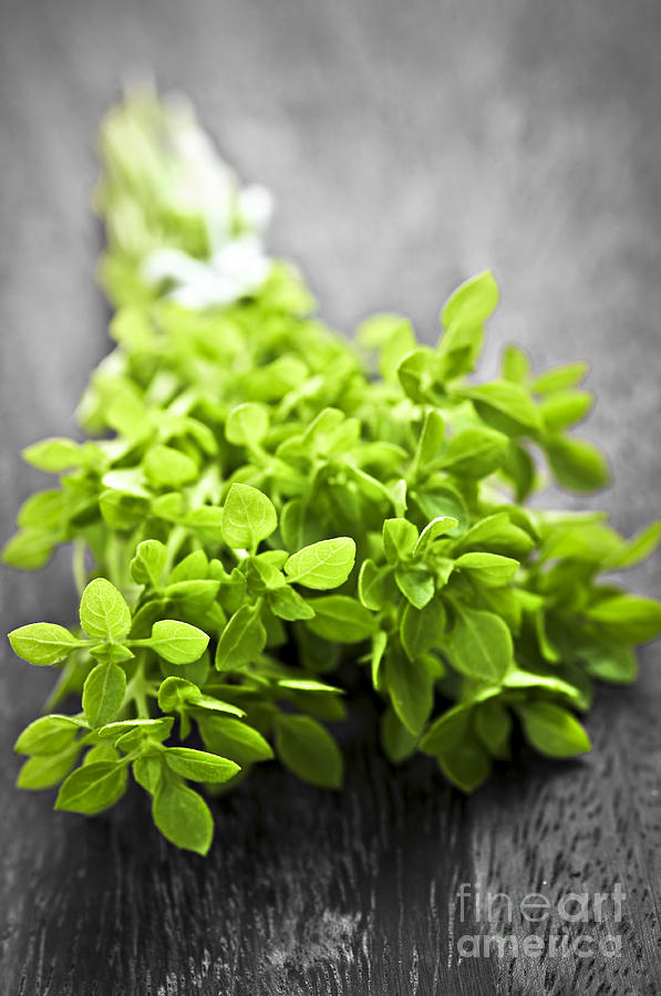 Bunch Of Fresh Oregano Photograph  - Bunch Of Fresh Oregano Fine Art Print