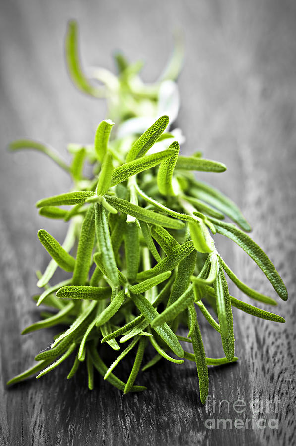 Bunch Of Fresh Rosemary Photograph