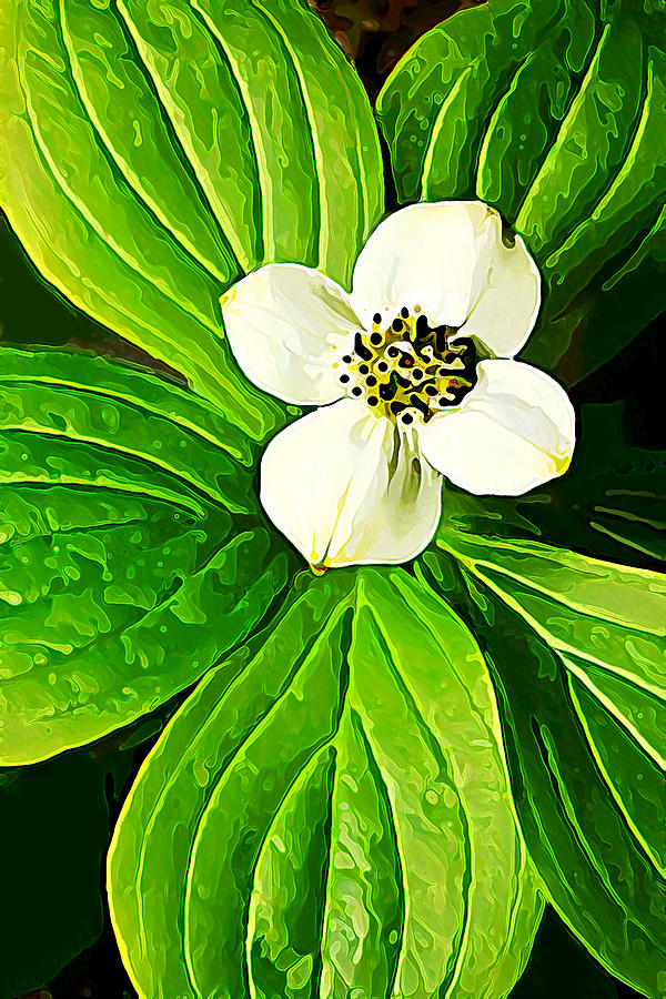 Nature Digital Art - Bunchberry Blossom by Bill Caldwell -        ABeautifulSky Photography
