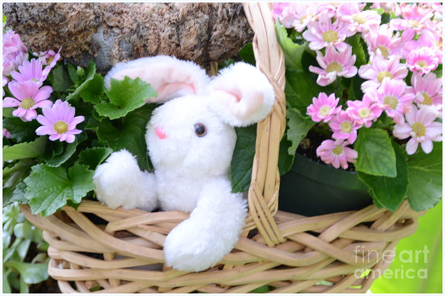 Bunny In A Basket Photograph  - Bunny In A Basket Fine Art Print