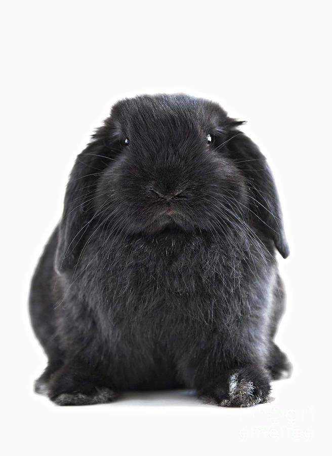 Bunny Rabbit Photograph