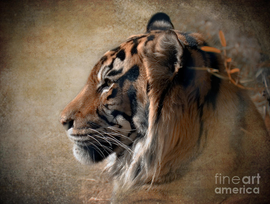 Tiger Photograph - Burning Bright by Betty LaRue