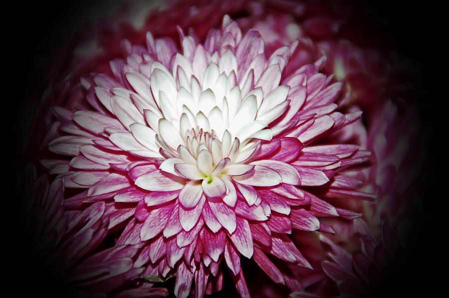 Burning Pink Photograph