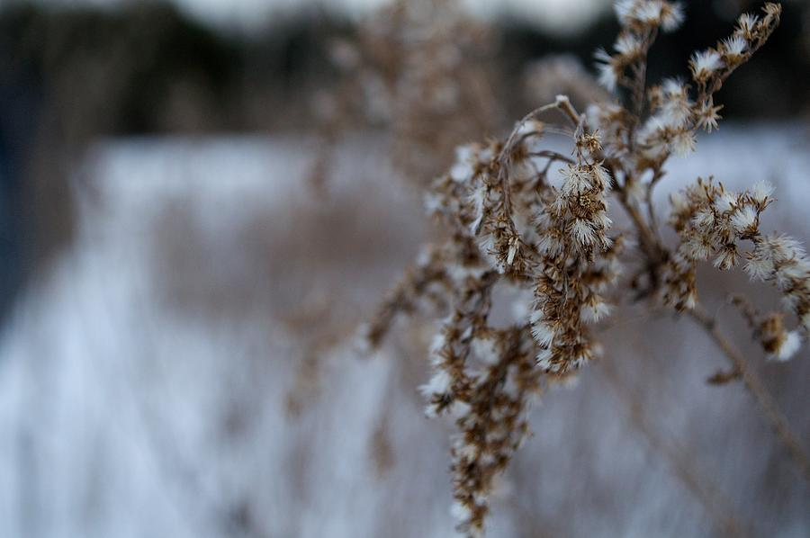 Burs In The Winter  Photograph  - Burs In The Winter  Fine Art Print