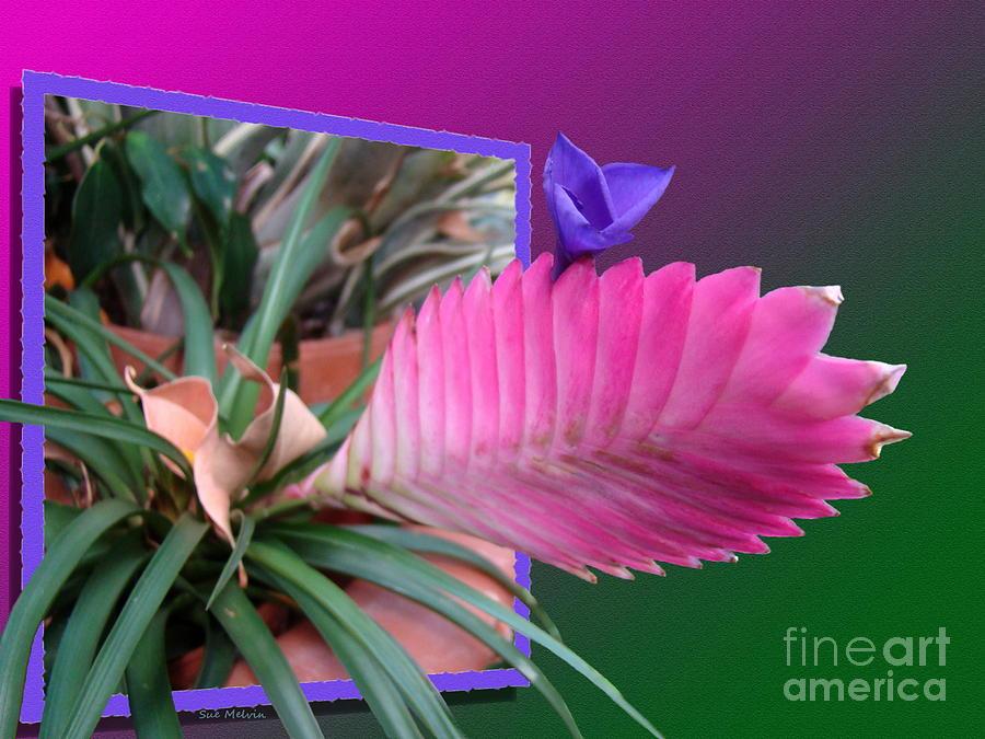 Bursting Forth In Bloom Digital Art