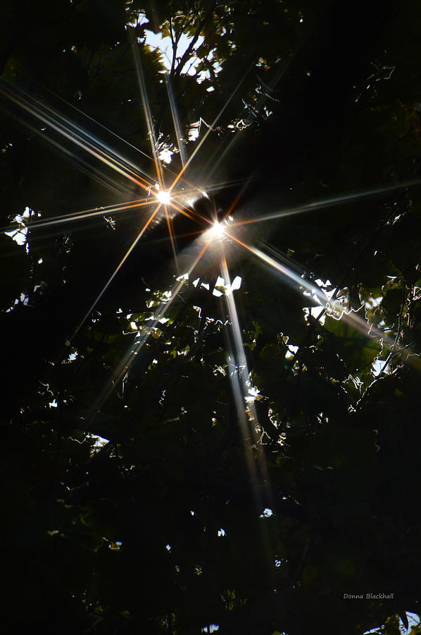 Sunlight Photograph - Bursting Through Trees by Donna Blackhall