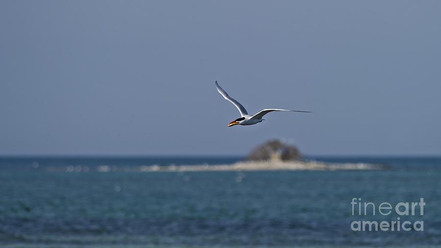 Busy Maritimes... Photograph