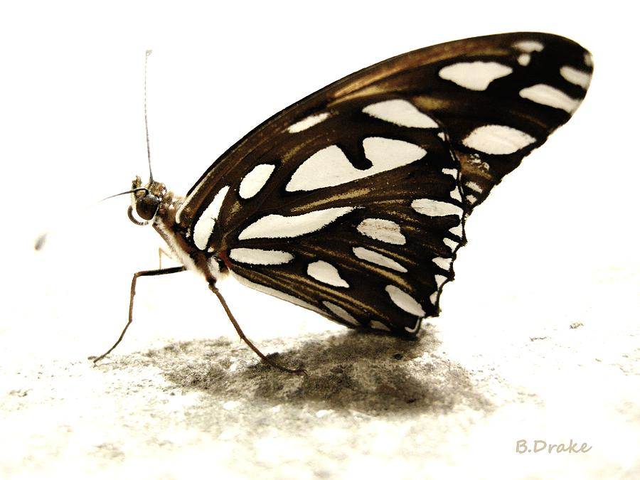 Butterfly Afterlife Photograph  - Butterfly Afterlife Fine Art Print