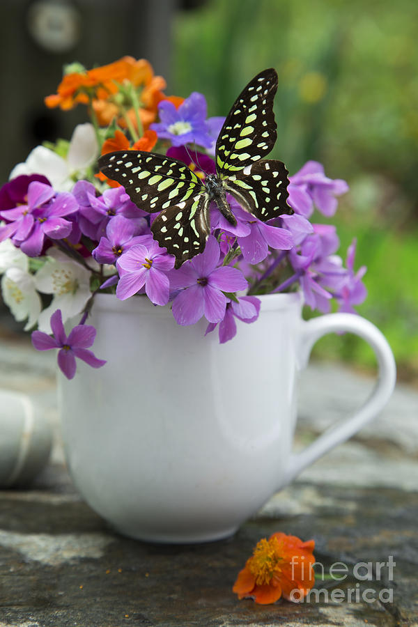 Butterfly And Wildflowers Photograph