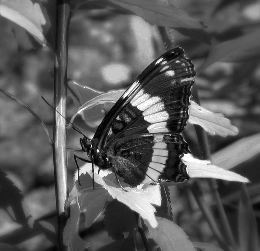 Butterfly At Rest Photograph