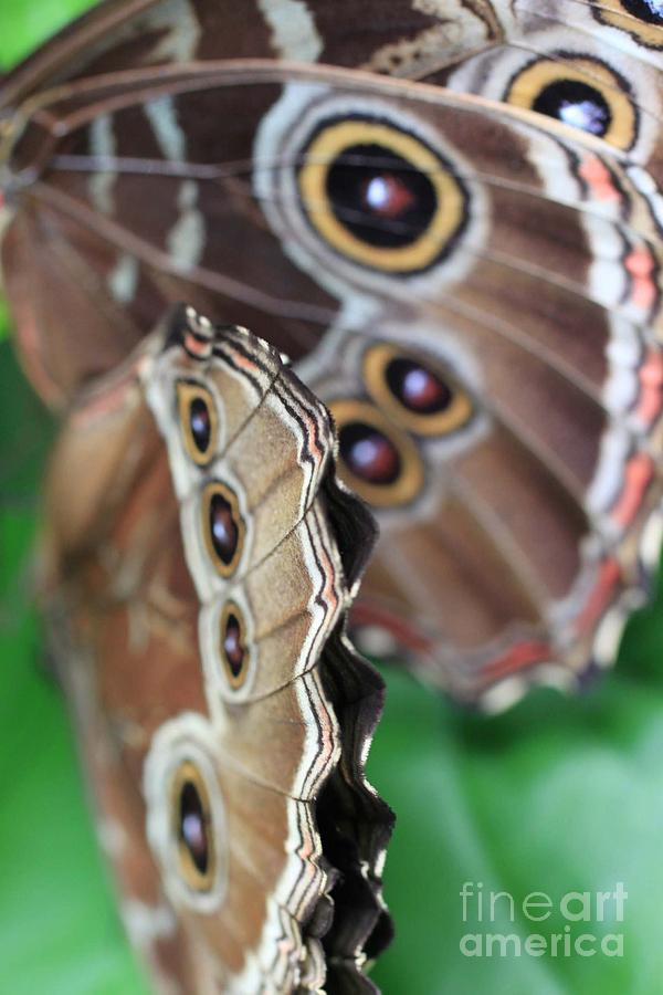 Butterfly Close Up  Photograph  - Butterfly Close Up  Fine Art Print