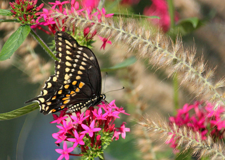 Butterfly Days Photograph  - Butterfly Days Fine Art Print