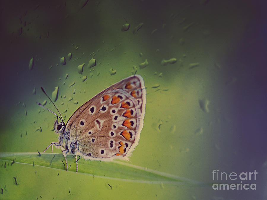 Butterfly Photograph  - Butterfly Fine Art Print