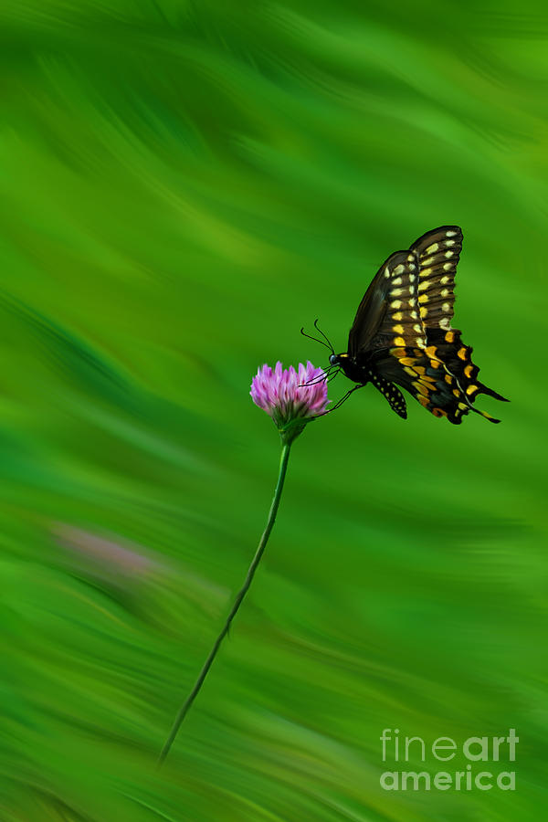 butterfly fly over the - photo #42