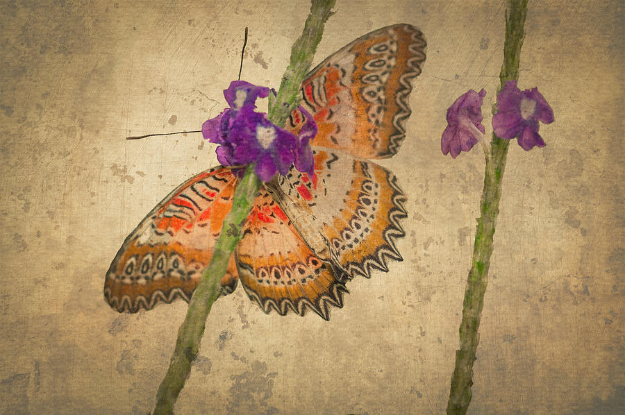 Butterfly Fresco Photograph  - Butterfly Fresco Fine Art Print