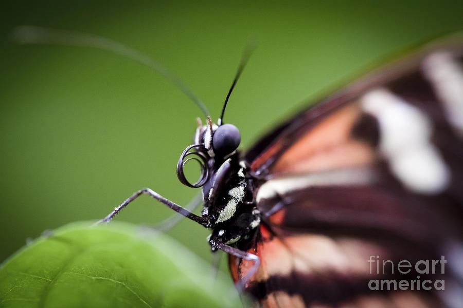 Butterfly Head Shot by Jason Moynihan