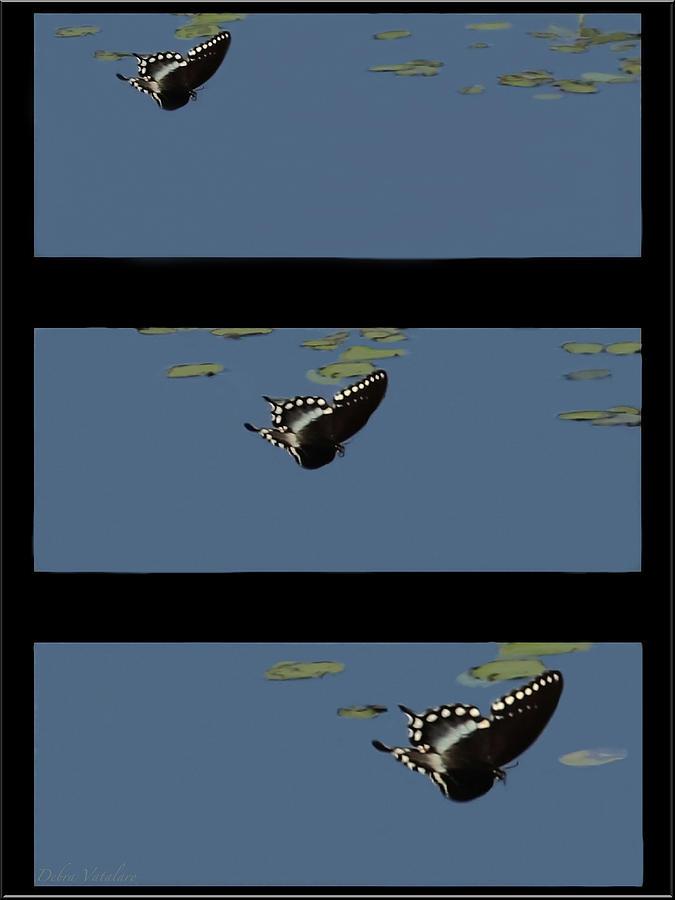 Butterfly Landing Photograph