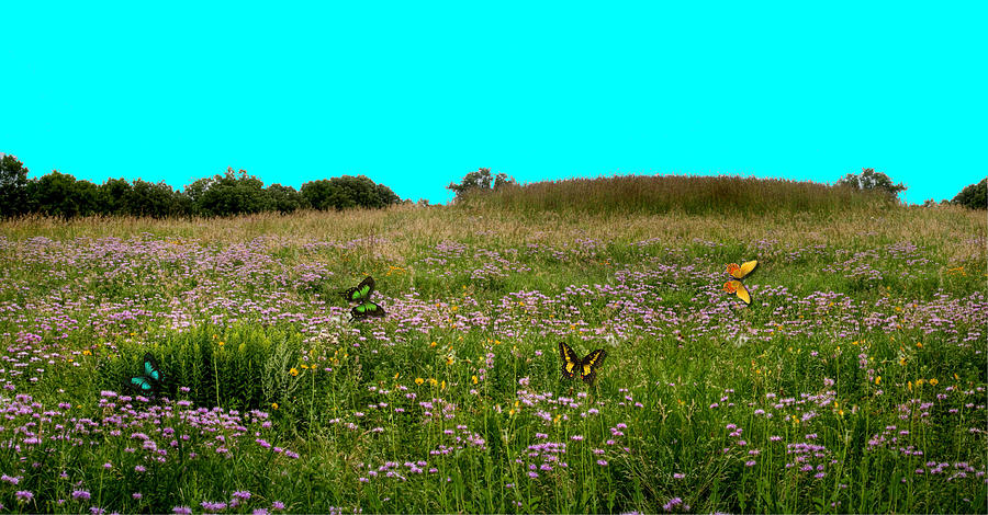 Butterfly Meadow Photograph  - Butterfly Meadow Fine Art Print