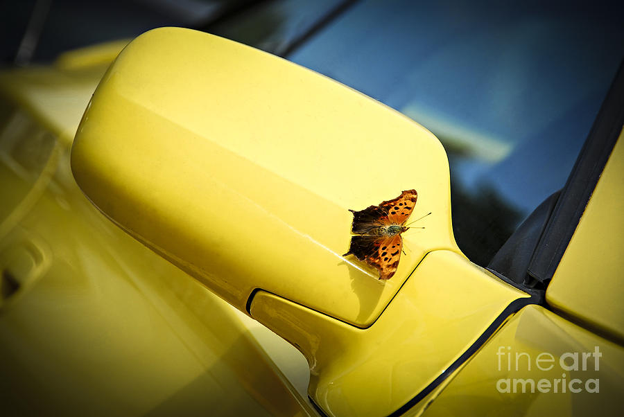 Butterfly On Sports Car Mirror Photograph  - Butterfly On Sports Car Mirror Fine Art Print